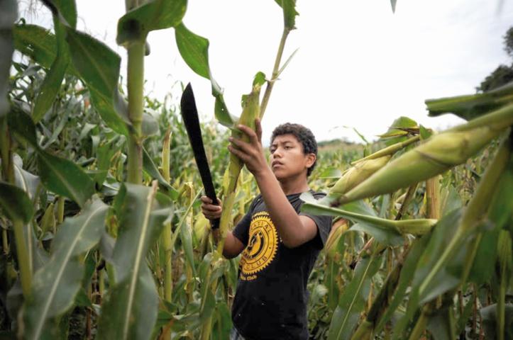 L'Indice FAO des prix alimentaires affiche son plus fort recul depuis décembre 2008