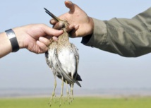 Ouverture de la saison de la chasse dans l'Oriental