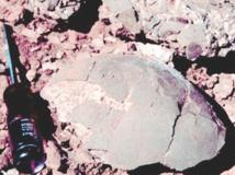 La température de dinosaures mesurée à partir de leurs œufs