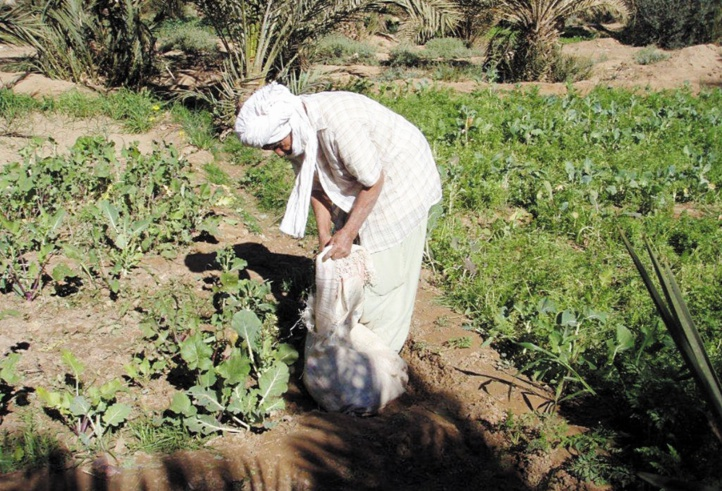 Le Plan Maroc Vert creuse les sillons de l'inégalité
