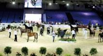 Le Salon du cheval 2015 d'El Jadida a tenu toutes ses promesses