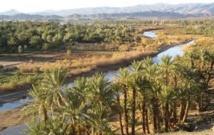 Programme oasis Tafilalet, une expérience à élargir à d'autres régions