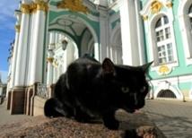 Au musée de l'Ermitage, des chats tiennent compagnie aux chefs-d'œuvre