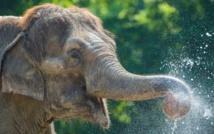 Pourquoi les gros animaux fabriquent les plus petits spermatozoïdes ?