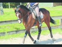 Le cheval Arkaitz remporte  le Grand prix de Sa Majesté le Roi Mohammed VI du pur-sang anglais