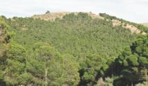 Partenariat HCEFLCD -CAM pour le financement du secteur coopératif forestier