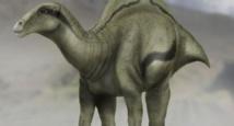 Découverte d'un nouveau dinosaure portant une voile sur le dos