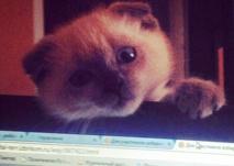Insolite : Un chat en tête des sondages