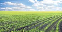 Adoption du projet de Plan comptable agricole