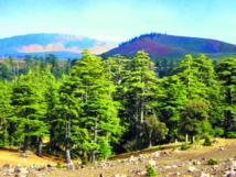 Financement de la conservation des forêts des  provinces de Taza, Taounate, Guercif et Al-Hoceima