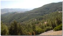 Plus de 107 MDH pour la conservation des forêts