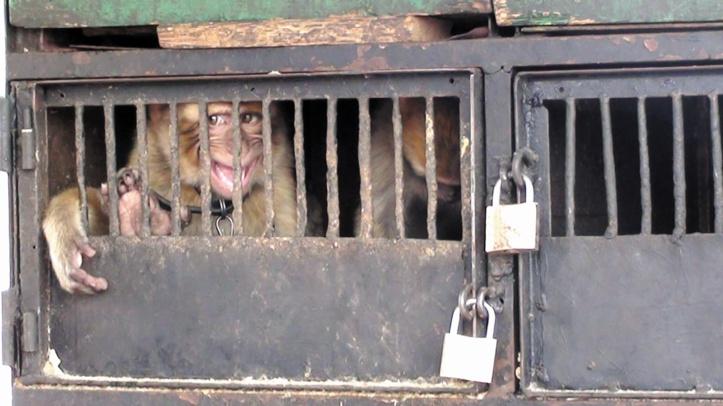 Trafic illicite d'animaux : Un marché d'environ 15 milliards d'euros par an
