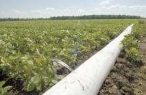 L'urbanisation galopante menace les ressources en eau et en terres agricoles