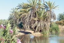 L'oasis de Tighmert : La beauté resplendissante d'une nature coriace