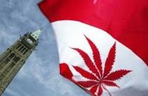La légalisation du cannabis rapporterait des milliards au Canada