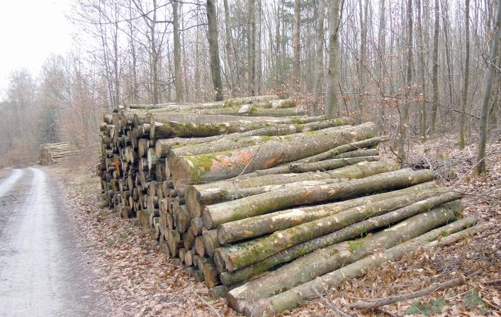 Série de mesures pour réduire la pression sur le bois de chauffage dans le Haut Atlas