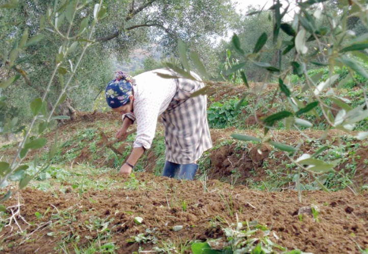 Le rôle des femmes semencières dans la sécurité alimentaire