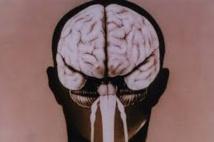 Les mystères de la formation des plis et replis de notre cerveau s'éclaircissent