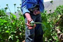 Les drogues illicites encouragent la violence et entravent le développement durable