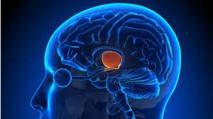 De petites neurones pour inhiber la douleur