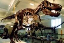 Les T.rex ne sont devenus énormes qu'à la fin de leur évolution