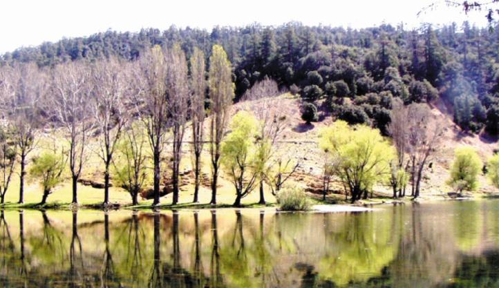 Sensibilisation sur l'importance de préserver les forêts