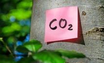 Les végétaux s'adaptent mieux au réchauffement