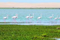 La biodiversité des écosystèmes devrait être une priorité nationale