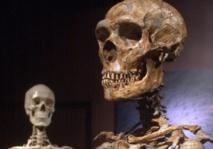 Premier séquençage des gènes du chromosome Y de l'homme de Néandertal