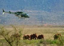 Des colliers GPS pour suivre les éléphants et les protéger d'un chemin de fer au Kenya