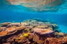 De nombreux récifs  risquent de mourir dans  les 20 prochaines années