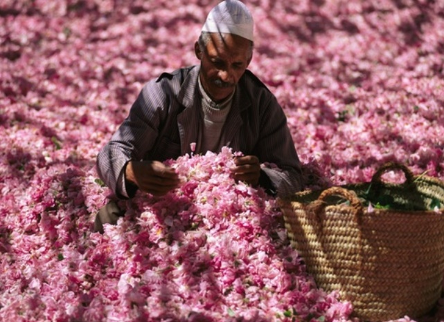 Ouverture à Kelâat M'gouna du 54ème Festival des roses