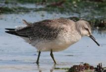 Le réchauffement réduit la taille et la morphologie d'oiseaux