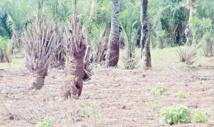 Aide à la décision pour de la gestion durable des terres