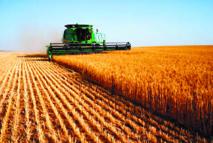L'agriculture, moteur du développement économique au Maroc