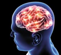 Santé : La maladie d'Alzheimer, une réaction à une infection ?