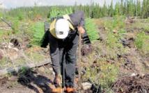 Les oppositions contre le reboisement des forêts posent problème