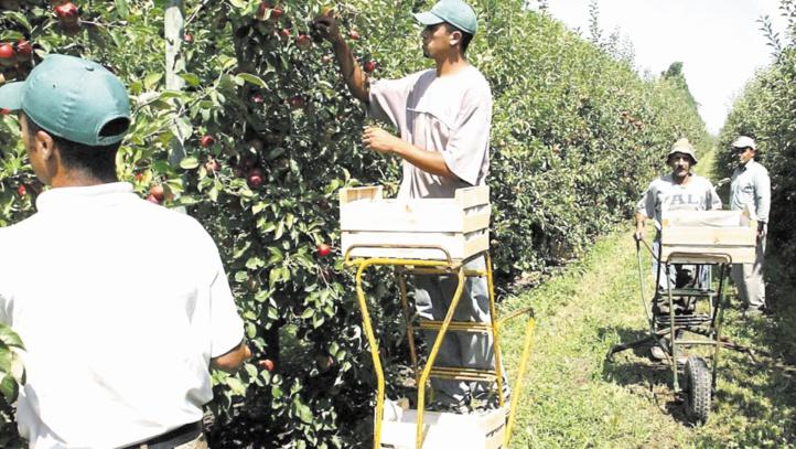 Renouvellement des licences de plus de 2000 travailleurs marocains saisonniers en Espagne