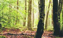 La FAO appelle à combler le fossé entre la foresterie et l'agriculture