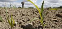 Dame nature pénalise la céréaliculture nationale