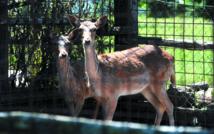 A Rome, une arche de Noé pour animaux exotiques victimes d'un trafic lucratif