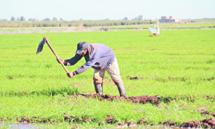 Atténuer les effets du déficit pluviométrique de la dernière campagne agricole