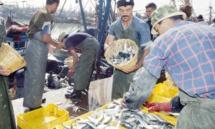Hausse des débarquements de la pêche côtière et artisanale au 1er semestre 2016