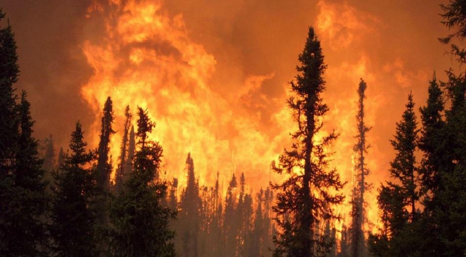 Des incendies ravagent plusieurs forêts au Maroc