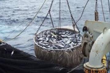 Chasse, pêche, agriculture: des ennemies de la biodiversité pires que le réchauffement