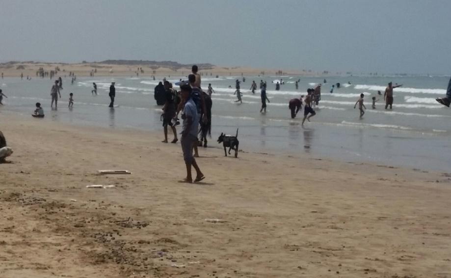 Les dromadaires côtoient les estivants sur la plage d'Essaouira