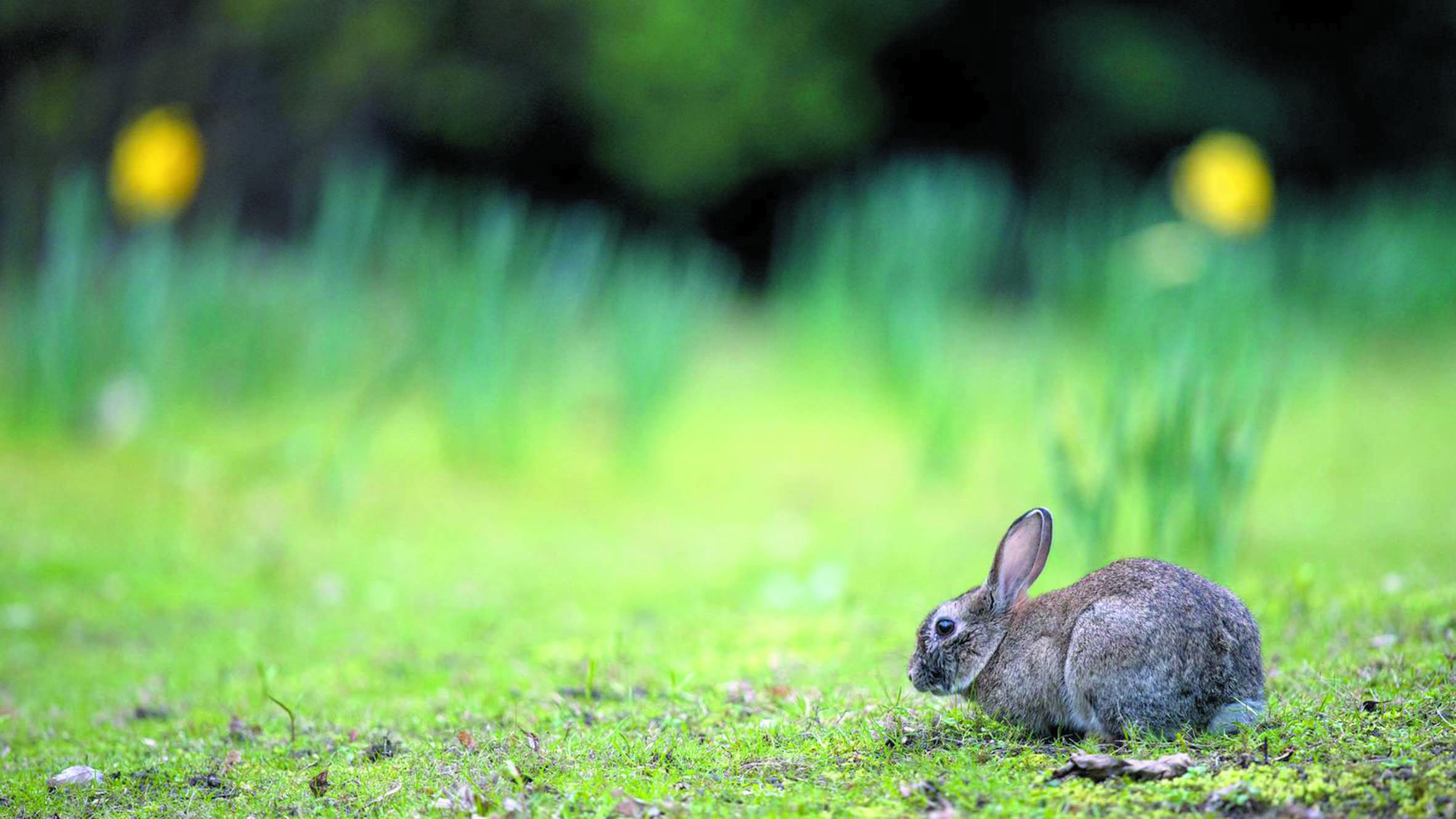 Une ancienne civilisation mexicaine élevait et mangeait des lapins