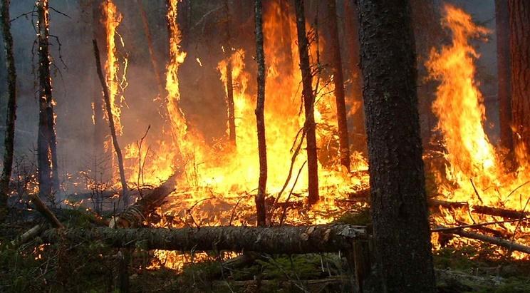 Un total de 270 départs de feu sur une superficie de 1739 ha de forêts depuis le 1er janvier 2016