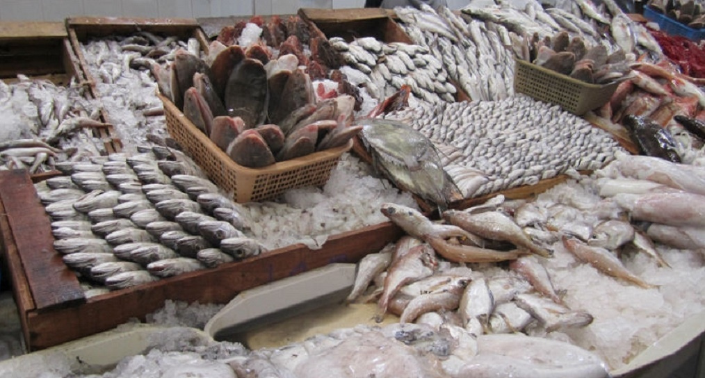 Les débarquements de la pêche côtière et artisanale se chiffrent à près de 4 MMDH