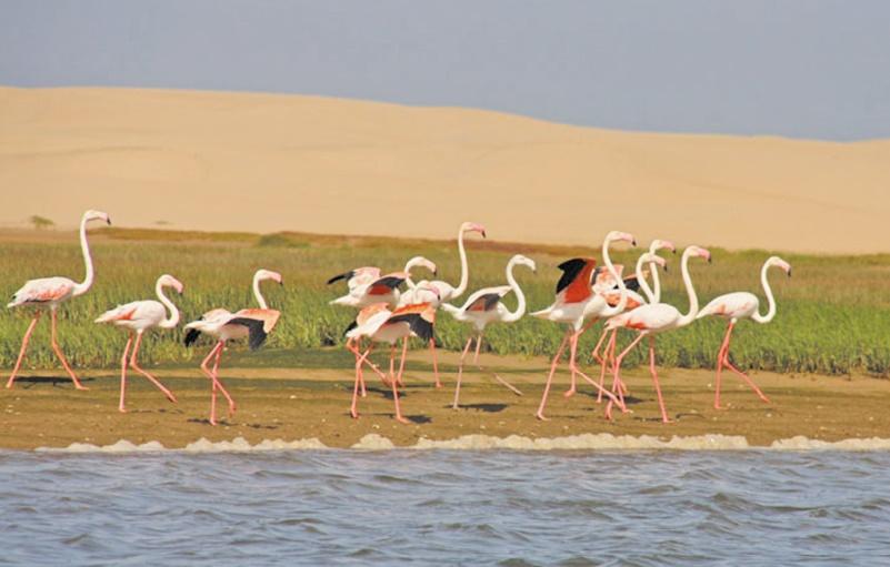 Les potentialités naturelles et écologiques au parc national de Khnifiss